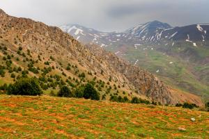 2017 Iran Allamut Valley IMG-9170 (Copy)